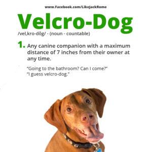 VelcroDogDefinition