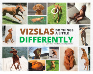 VizslasDoDifferent